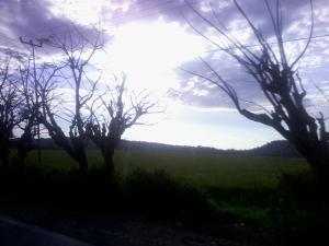 Pemandangan Alam di Oesao