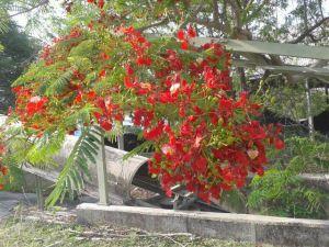 pohon berbunga