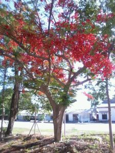 Sepe si Pohon Berbunga