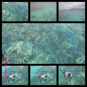 terumbu karang riung