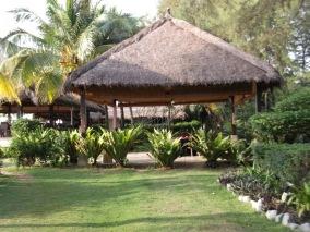 Keunikan Goldem Palm Tree