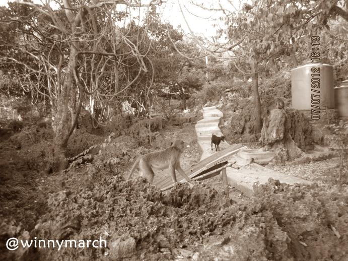 Pemandangan Kupang