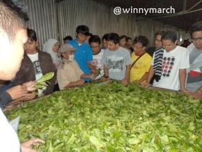 Anak MT Gama Group mendengarkan tentang daun teh