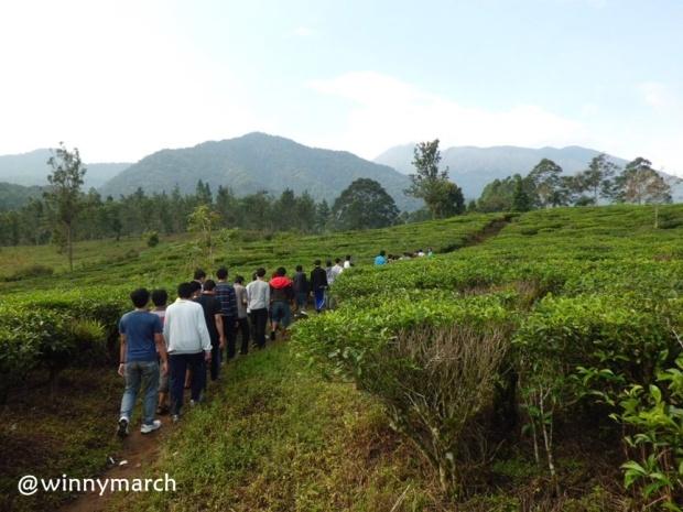 MT. Gama Group bersusun sejajar di Puncak Bogor