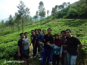 MT Gama Group di kebun teh