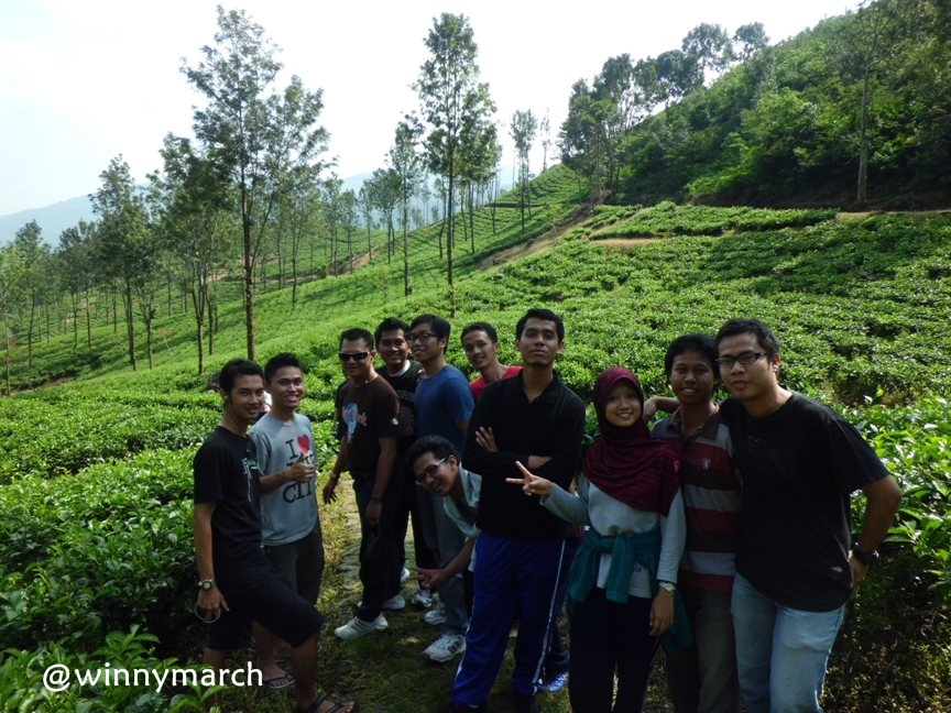 MT Gama Group di kebun teh
