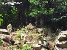 Batuan diatas Puncak Bogor