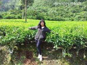 Aku di kebun teh