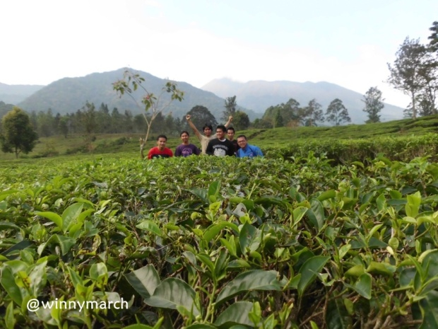 Kebun teh Bogor