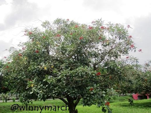 Pohon dengan bunga merah