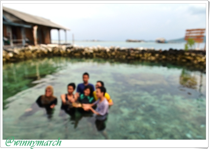 Penangkaran hiu di Karimun Jawa