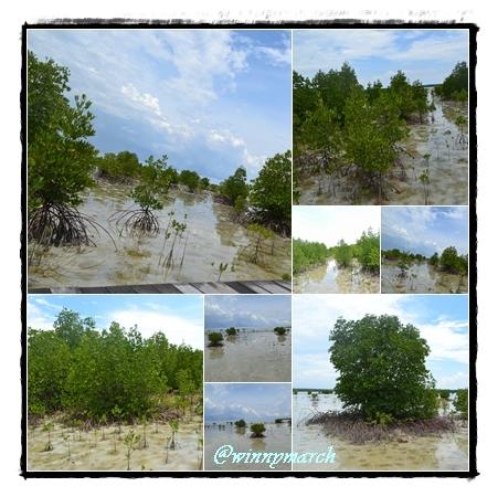 mangrove di karimun jawa