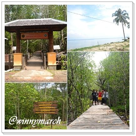 trecking mangrove
