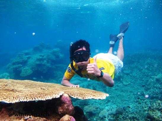 Coral in Karimun Jawa