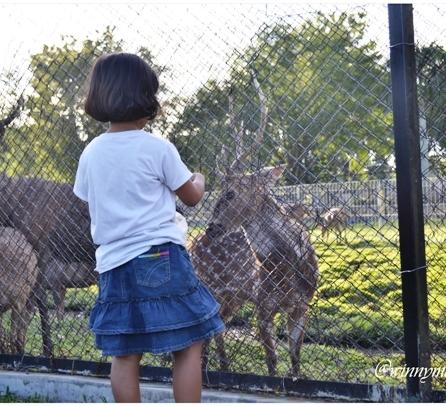 Kebun binatang mini USU