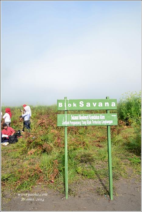 Savana Bormo