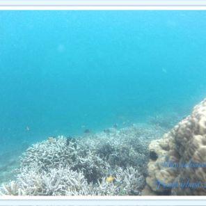 Karang di Pulau tunda
