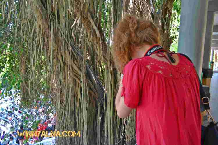 Cecil saat memphoto kupu-kupu di pohon