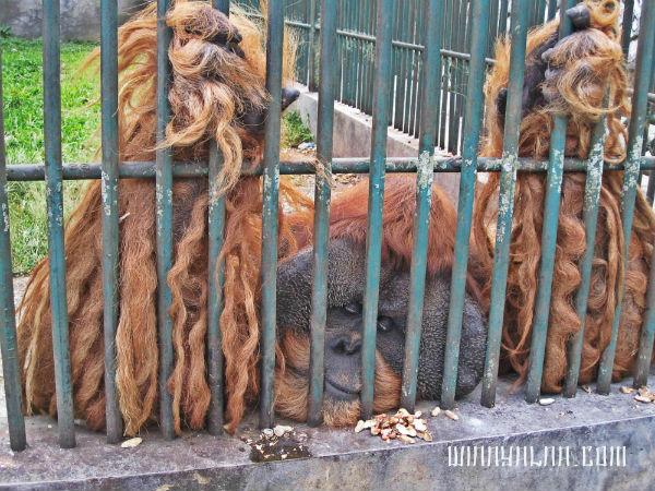 Kebun binatang Bukittinggi