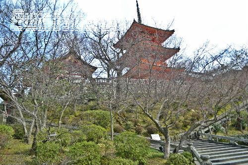 travelling to kiyomizudera temple
