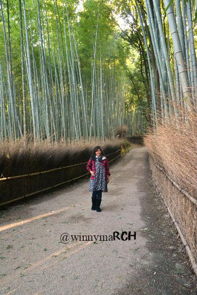 Arashima Bamboo Groove