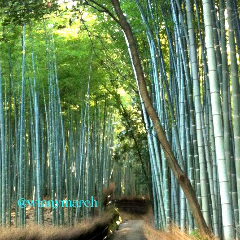 Bamboo Path Arashiyama