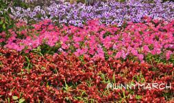the Gardens of Perfect Brightness