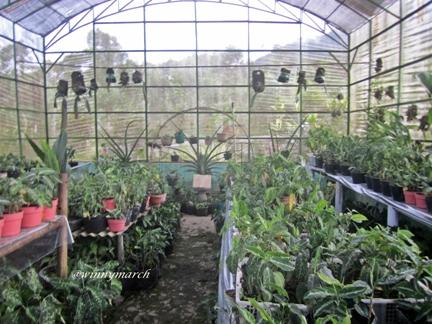 Taman Anggrek di Pintu Langit Padangsidempuan