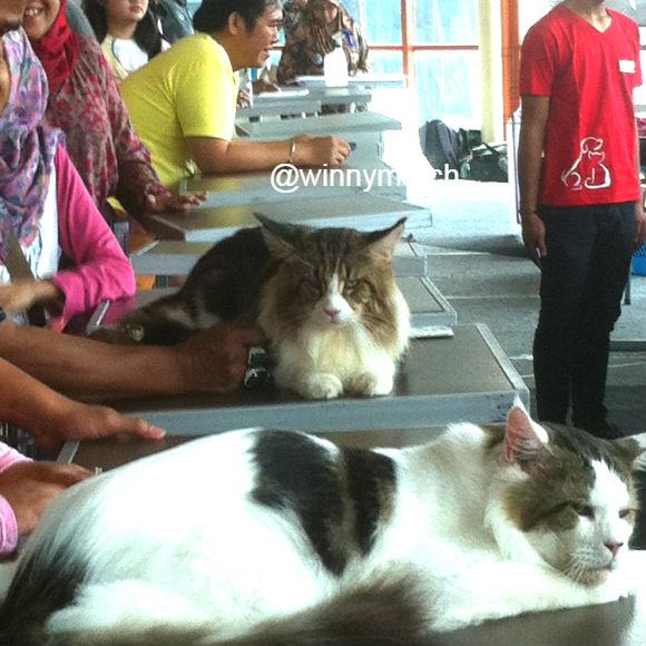 international cat shows