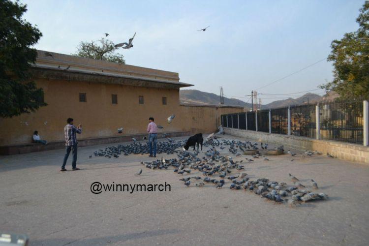 Ambert Fort, India