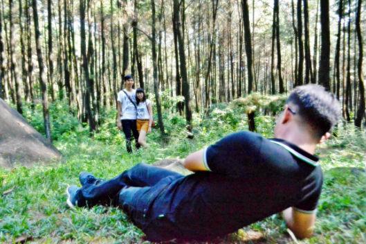 Hutan Pinus Bogor