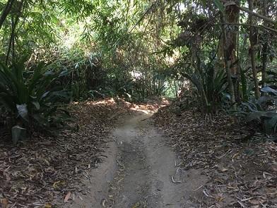 Ampang fall track