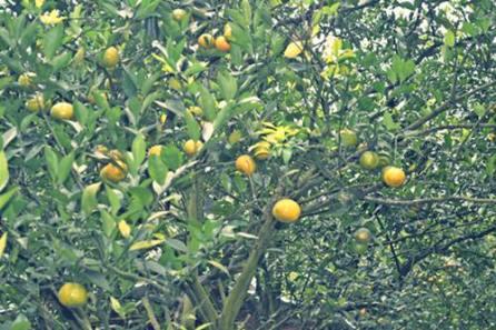 Kebun Jeruk